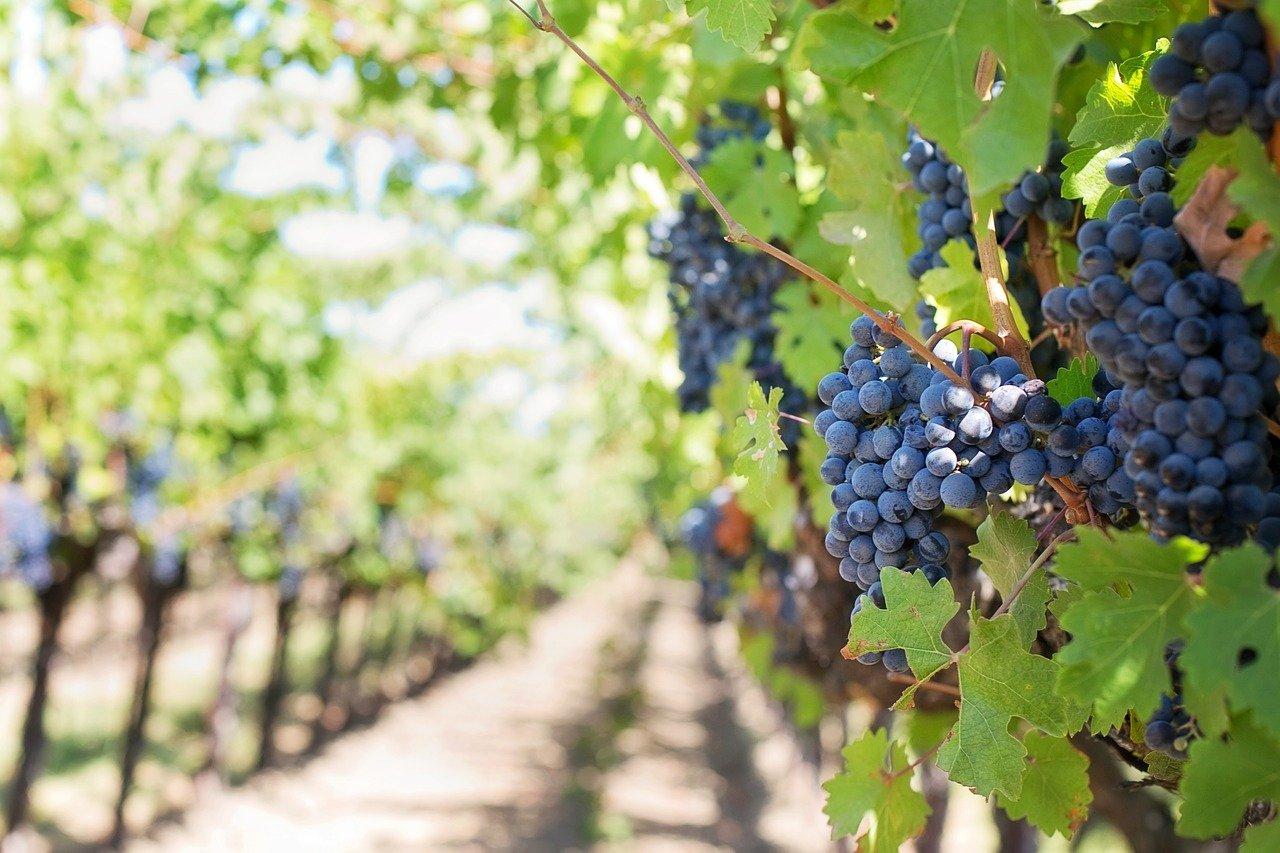 Quel est le processus de reprise d'un domaine viticole quand on est un non-initié